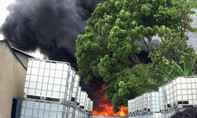 Hơn 2.000 con chim cút chết cháy do hàn xì biệt thự
