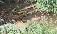 Phát hiện chân người ở dưới rạch nước tại Đồng Nai