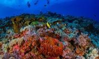 Những rạn san hô có nguy cơ bị hủy diệt trước hoạt động quân sự hóa Biển Đông