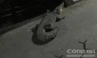 Cá sấu xổng chuồng ở khu dân cư khiến người dân hoảng hốt