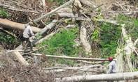 Bắt tạm giam cán bộ Phòng Tài nguyên và Môi trường tiếp tay phá 108ha rừng