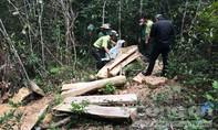 'Vũ khí hủy diệt' phá nát rừng đặc dụng Ea Sô