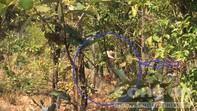 Cận cảnh nhóm lâm tặc ngang nhiên phá rừng