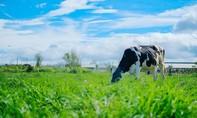 Organic – Xu hướng sống xanh khởi nguồn từ ly sữa hữu cơ tươi ngon thuần khiết
