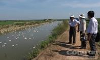 Phát hiện, tiêu hủy 6.500 con vịt nhiễm cúm H5N6