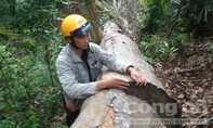 Họp báo thông tin vụ phá rừng biên giới do Báo Công an TP.HCM phản ánh