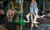 Tận diệt chim trời ở chợ Thạnh Hóa