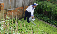Lính đảo Trường Sa 'mát tay', trồng rau bời bời xanh tốt