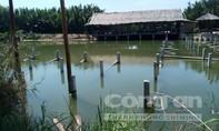 Khu rừng dừa nước ở Hội An bị xâm hại nghiêm trọng