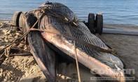 Ngư dân Mũi Né phát hiện cá voi nặng 15 tấn