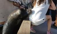Clip hải cẩu bất ngờ nhảy lên bờ lôi bé gái xuống biển