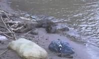 Phát hiện thi thể cháu bé trôi dạt vào mép sông