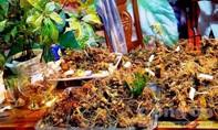 Khoảng 200kg Sâm Ngọc Linh được bán trong lễ hội lần thứ I