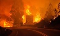 Cháy rừng ở Bồ Đào Nha làm 62 người chết