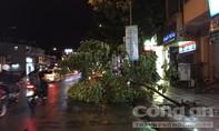 """Mưa lớn """"quật ngã"""" cây xanh xuống đường"""
