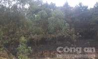 50ha rừng phòng hộ Nam Sơn bị thiêu rụi