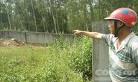 14 người bị ong rừng tấn công khi đi thắp hương trong nghĩa trang
