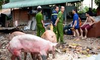 Cháy cơ sở chăn nuôi, nhiều con heo bị chết ngạt