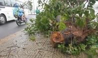 Đà Lạt mưa lớn, gió giật khiến nhiều cây xanh gãy đổ