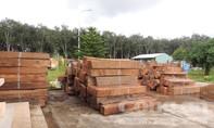 Tạm giữ số lượng gỗ khủng tại cửa khẩu