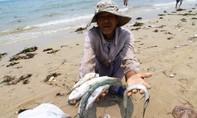 Vẫn còn mẫu hải sản tầng đáy biển Hà Tĩnh chưa an toàn