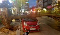 TP.HCM: Trời không mưa, không gió, cây vẫn ngã đè ô tô