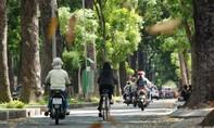 Đốn hạ 143 cây xanh trên đường Tôn Đức Thắng