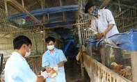 Vứt gia súc, gia cầm mắc bệnh, chết ra môi trường bị phạt đến 6 triệu đồng