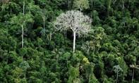 Tòa Brazil bác dự án khai thác mỏ trong khu vực rừng Amazon