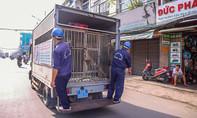 Theo chân Đội bắt chó thả rông TP.HCM