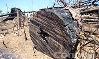 Kiểm tra, xử lý vụ phá rừng phòng hộ xã Tiên Lãnh