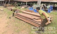 Bắt xe tải chở gỗ lậu