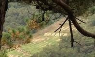 Điều tra lại việc lính Hàn Quốc bị dính đạn lạc sát biên giới Triều Tiên
