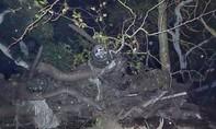 13 người thiệt mạng vì lũ bùn ở California, Mỹ