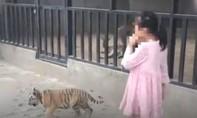 Cho bé gái 9 tuổi dắt hổ đi dạo gây bức xúc