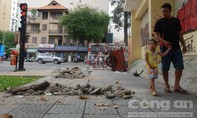 """Sài Gòn vào mùa... """"đào lên, lấp xuống"""" (kỳ 1)"""