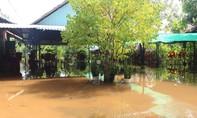 Nhiều vườn cây ăn trái, nhà dân chìm trong nước