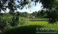 Tên cướp tài xế Grab taxi ở Sài Gòn bị bắt tại cánh đồng Phú Yên