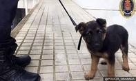 Chú chó bị ngược đãi trên phố, được 'đặc cách' vào quân khuyển