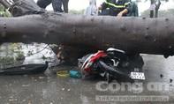 Cây xanh ngã đè một người đi đường tử vong ở Sài Gòn