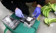 160 kg cocain trị giá 21 triệu USD giấu trong thùng chuối