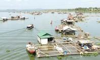 12 tỉ đồng hỗ trợ người dân bị chết gần 2.000 tấn cá