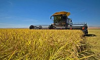 """Trung Quốc """"mua gạo đổi lấy quan hệ"""" với Mỹ"""
