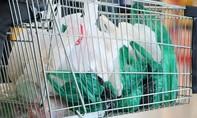 Hàn Quốc chính thức cấm sử dụng túi nhựa trong các siêu thị lớn