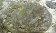Bảo tồn khẩn cấp di sản 'nghĩa địa' hóa thạch san hô hình cối xay