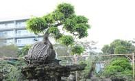 """Hội hoa xuân Phú Mỹ Hưng, nơi quy tụ cây cảnh """"độc và khủng"""""""