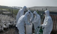 Trung Quốc xác nhận trường hợp đầu tiên nhiễm cúm H7N4