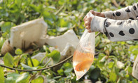 Thả cá chép tiễn ông Táo, người phụ nữ trượt chân xuống hồ tử vong