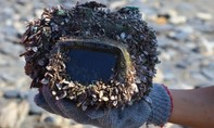 Máy ảnh vẫn hoạt động tốt sau 2 năm rơi xuống biển, trôi xa hàng trăm km
