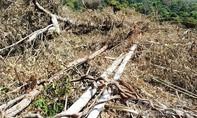 Bắt tạm giam 5 đối tượng phá gần 15ha rừng